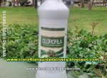 CLOROFILA LIQUIDA BEBIDA NATURAL EXTRACTO 600ML